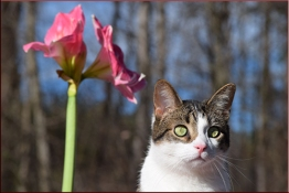 oscar-flower